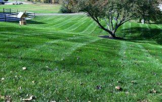 Lawn Services 3
