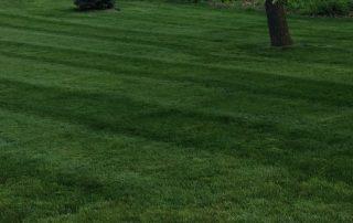 Lawn Services 5