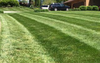 Lawn Services 6