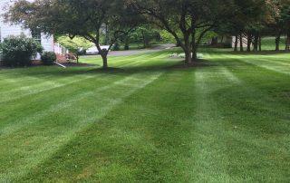 Lawn Services 7