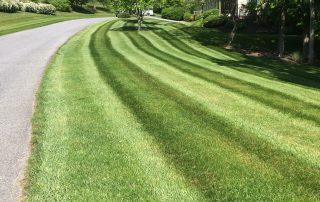 Lawn Services 8