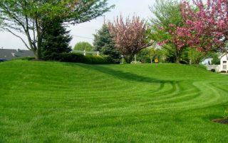 Lawn Services 22